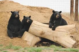Wild Animal Sanctuary, Colorado